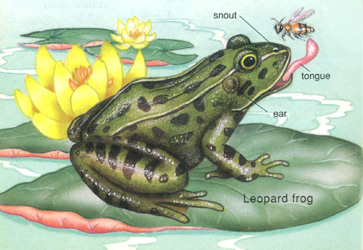 Zoology Illustration Two